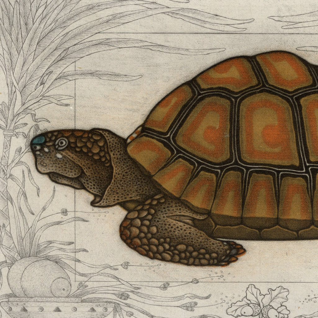 Michel Estebe - Tortue - Tortoise - Color mezzotint and drypoint