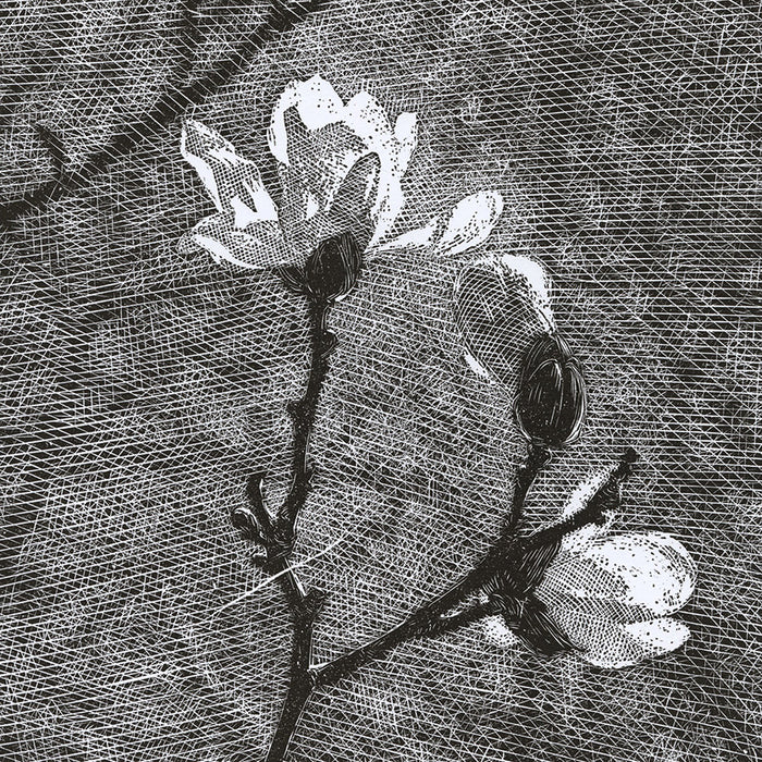 Olesya Dzhuraeva - Awakening - magnolia branch in bloom - linocut 2019 - detail