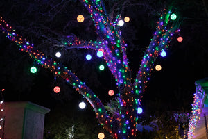 Multi colored lights in tree