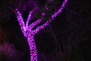 pink LED Christmas lights in tree