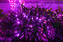 Load image into Gallery viewer, purple M5 LED Christmas lights