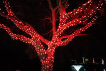 Load image into Gallery viewer, Red LED Christmas lights in a tree