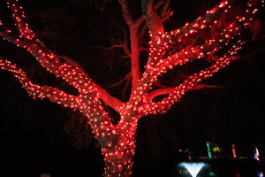 Red LED Christmas lights in a tree