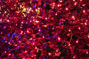 red LED net lights