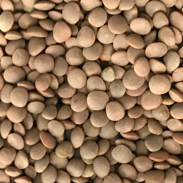 lentils brown (0.5L refill)