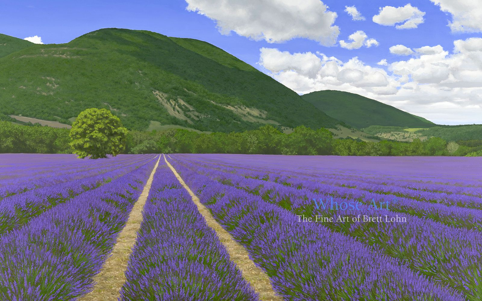 Lavender fields painting in oil on canvas showing rows of lavender in a field. The weather is warm and the breeze still