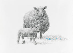 Lamb greeting card showing a drawing of a lamb with a sheep. The lamb is striding confidently in front of the sheep.