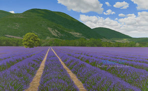 Lavender Wall Art Print of a painting of a lavender field in France with a mountain in the background. The lavender is in rows