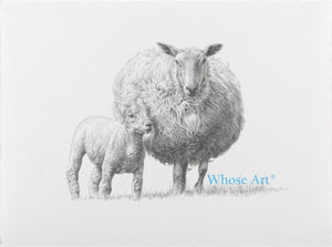 A sheep print showing a black and white pencil drawing of a lamb and a sheep together. Lamb art print in graphite pencil.