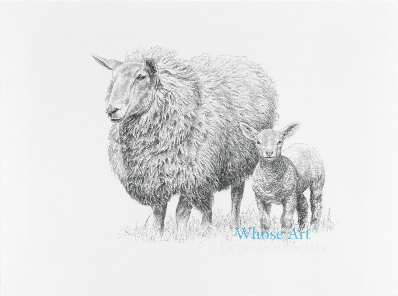 A sheep wall art drawing in pencil showing a lamb and sheep together in black and white.