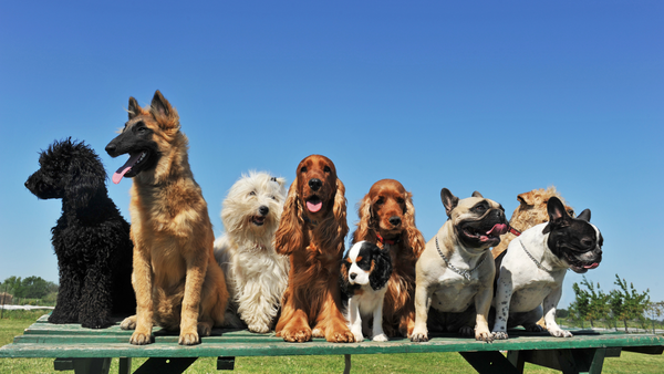How to - Select the Right Dog Breed