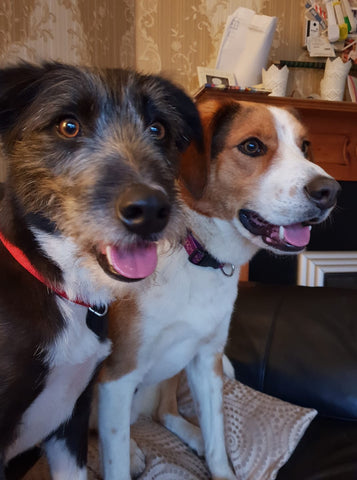 Charlie & Mylo - two dogs sitting on the sofa