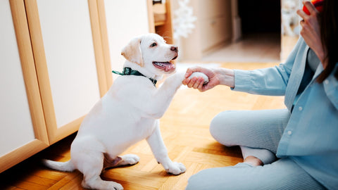 teaching a puppy to give their paw