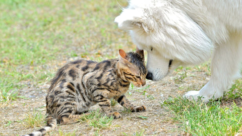 white dog sniffing tabby cat