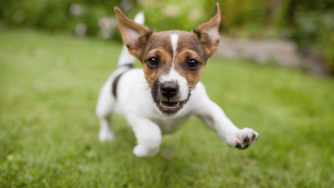 excited dog playing in grass