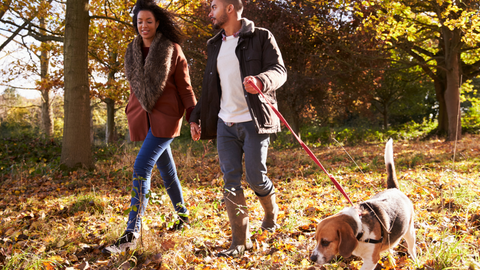 Couple walking dog through autumnal forest scene