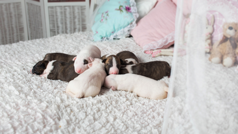 puppies bed toys