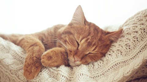 sleeping ginger cat on knitted cushion