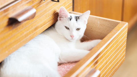 White cat lying in an open drawer