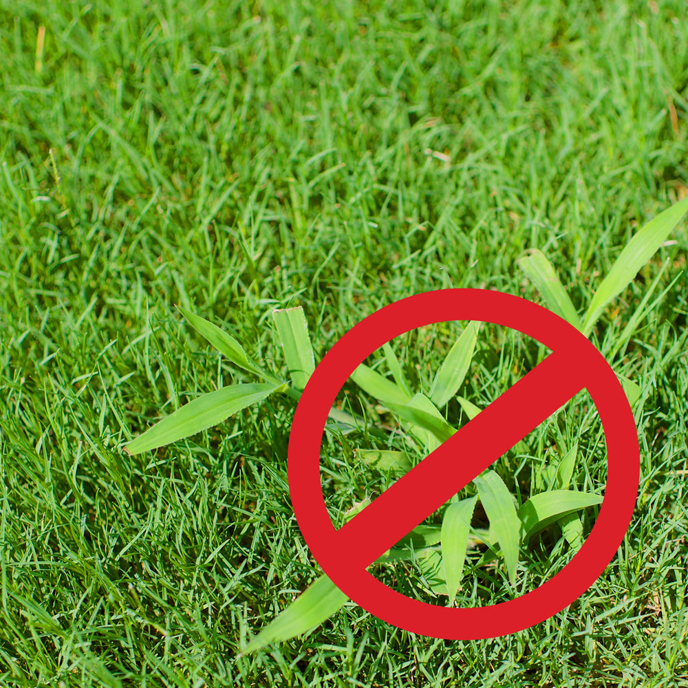 Purely Organic Products Crabgrass Defender Lawn Food (15 Lb - Covers 3000 Sq Ft)