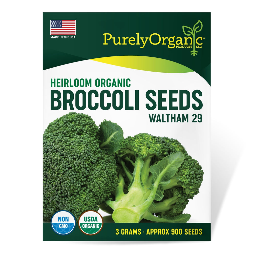 Purely Organic Heirloom Broccoli Seeds (Heirloom Waltham 29) - Approx 900 Seeds