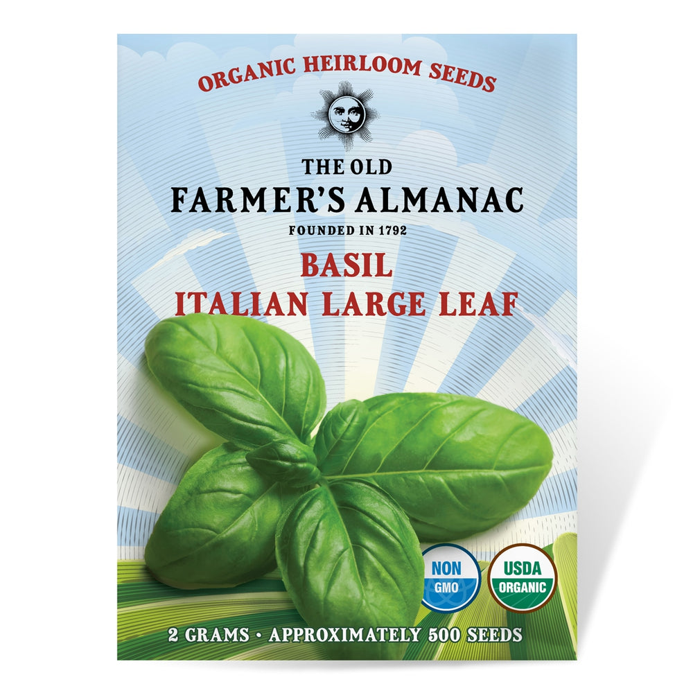 The Old Farmer's Almanac Organic Heirloom Basil Seeds (Italian Large Leaf) - Approx 500 Seeds