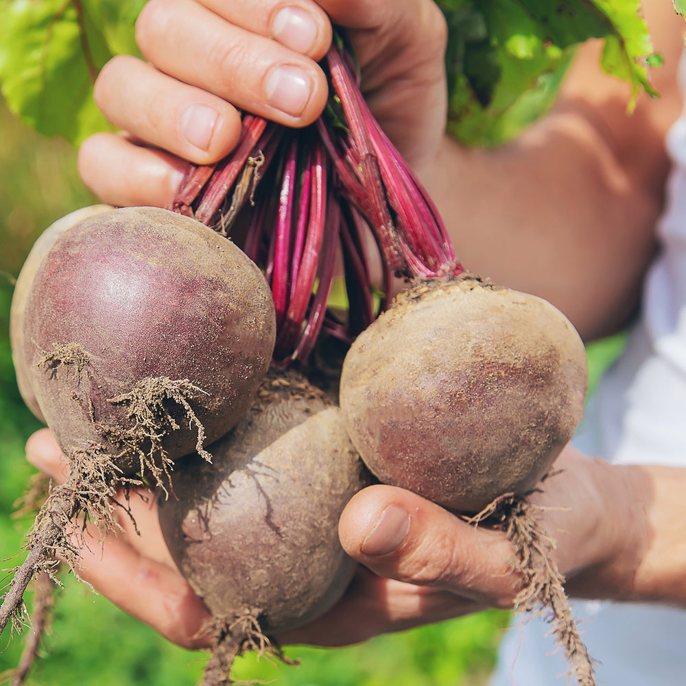 The Old Farmer's Almanac Beet Seeds (Heirloom Detroit Dark Red)