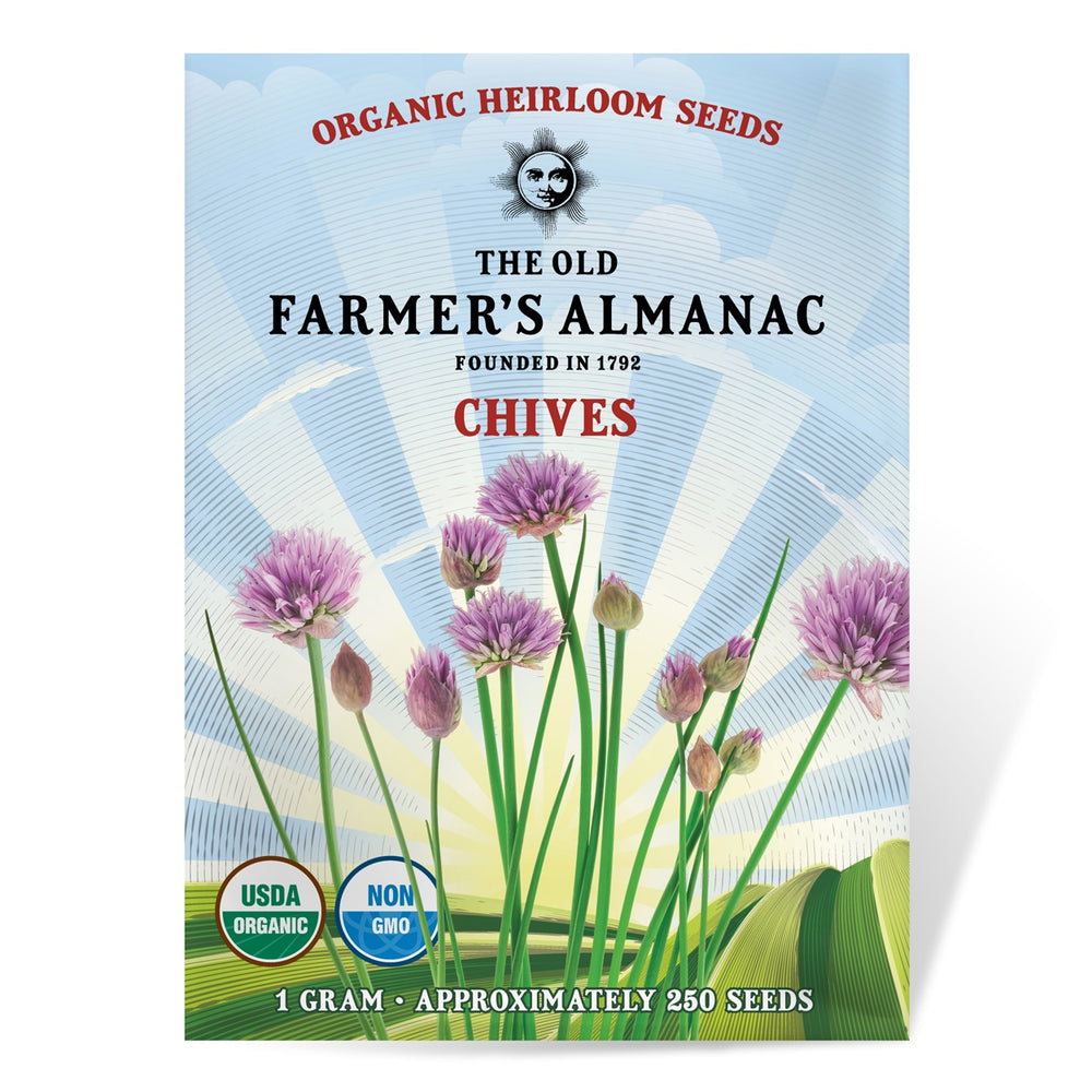 The Old Farmer's Almanac Chive Seeds (Heirloom Organic) - Approx 250 Seeds