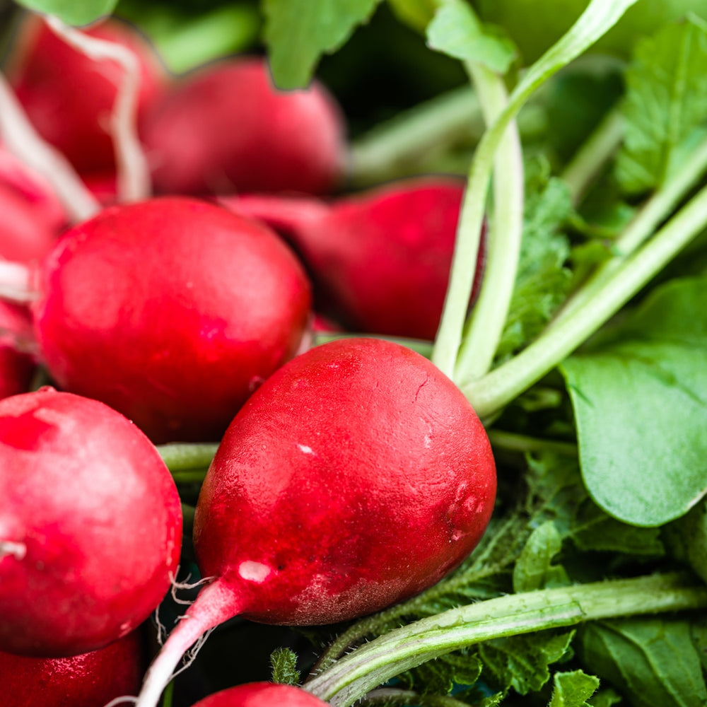 The Old Farmer's Almanac Organic Radish Seeds (Heirloom Cherry Belle)