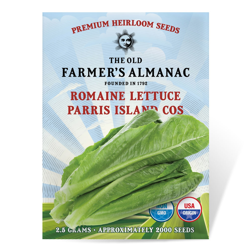 The Old Farmer's Almanac Heirloom Romaine Lettuce Seeds (Parris Island Cos) - Approx 2000 Seeds