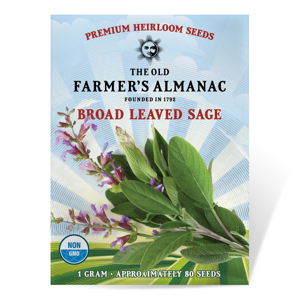 The Old Farmer's Almanac Sage Seeds (Broad Leaved Sage) - Approx 80 Seeds