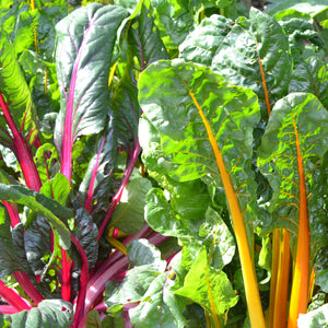 The Old Farmer's Almanac Swiss Chard Seeds (Rainbow Mixture)