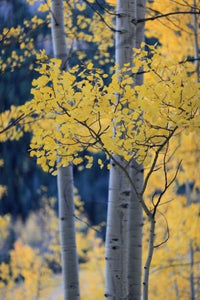 Fall Foliage Must Sees Of Colorado