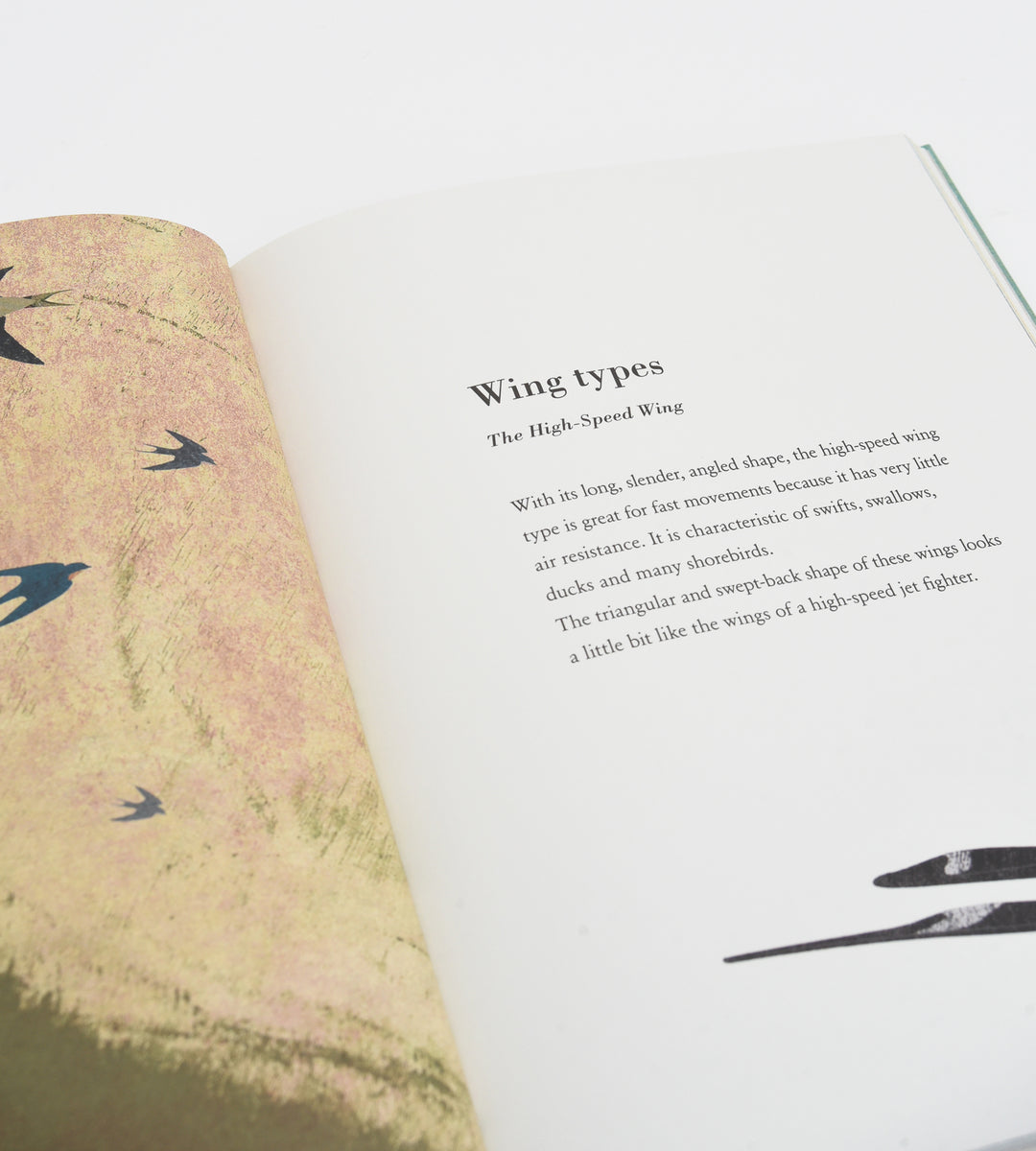 Birds and their Feathers | By Britta Teckentrup