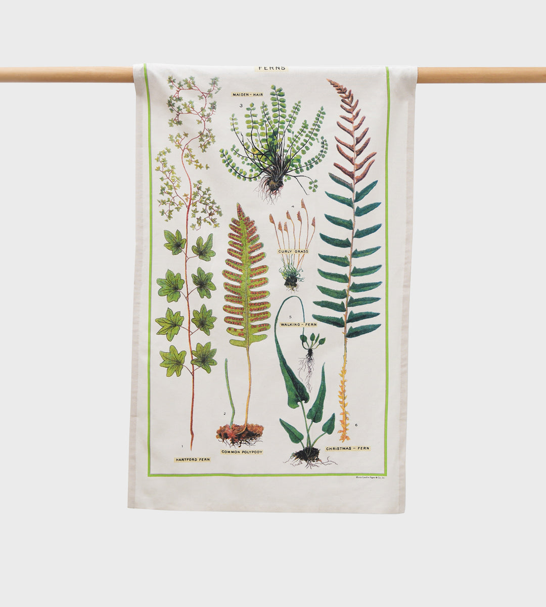 Cavallini | Fern Tea Towel
