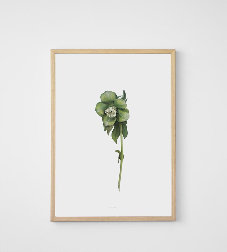Father Rabbit | Hellebore Print