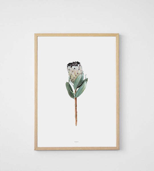 Father Rabbit | Protea Print