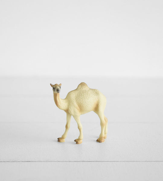 Little Animal | Camel