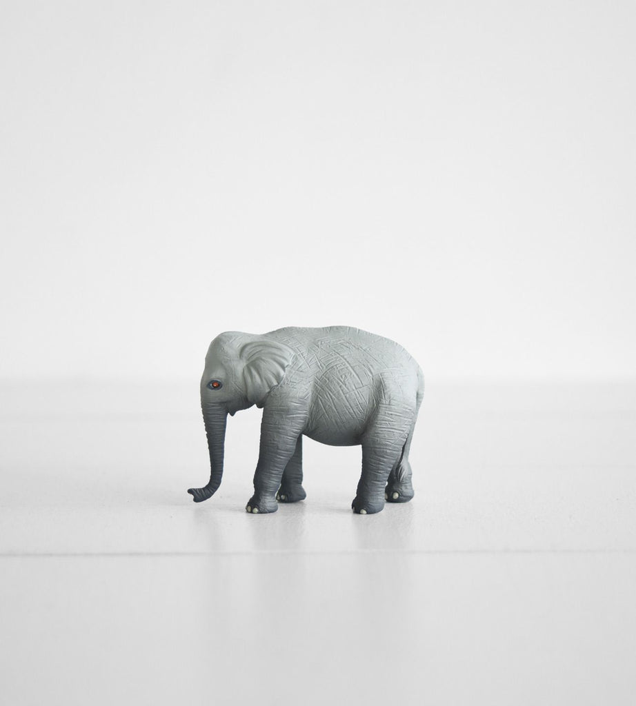 Little Animal | Elephant