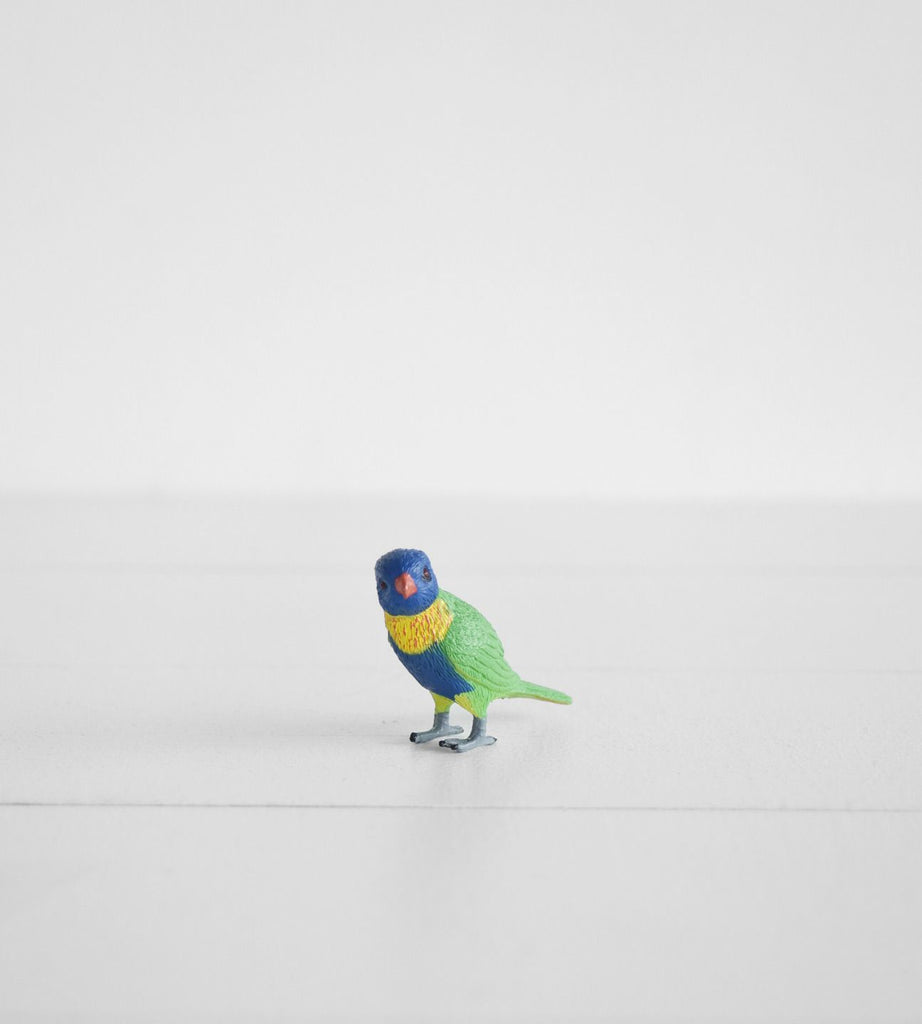 Little Animal | Lorikeet