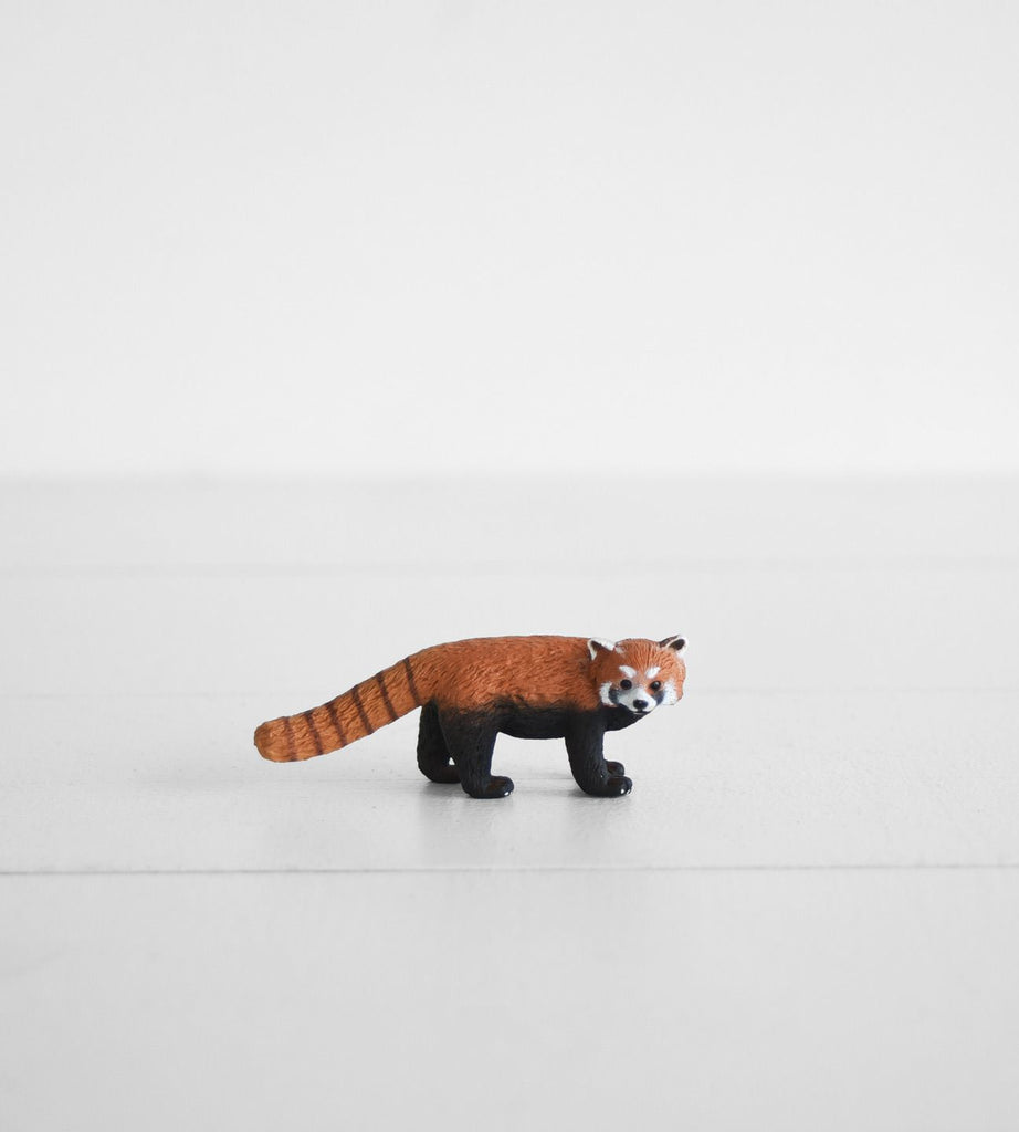 Little Animal | Red Panda
