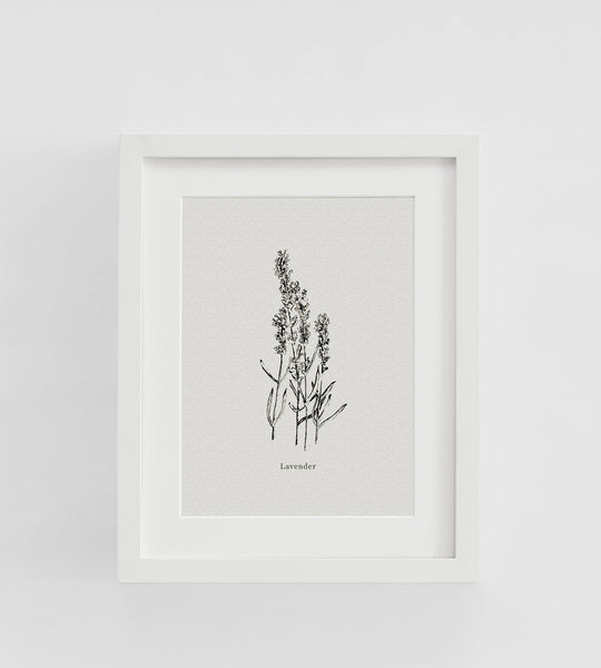 Father Rabbit | Framed Print | Lavender