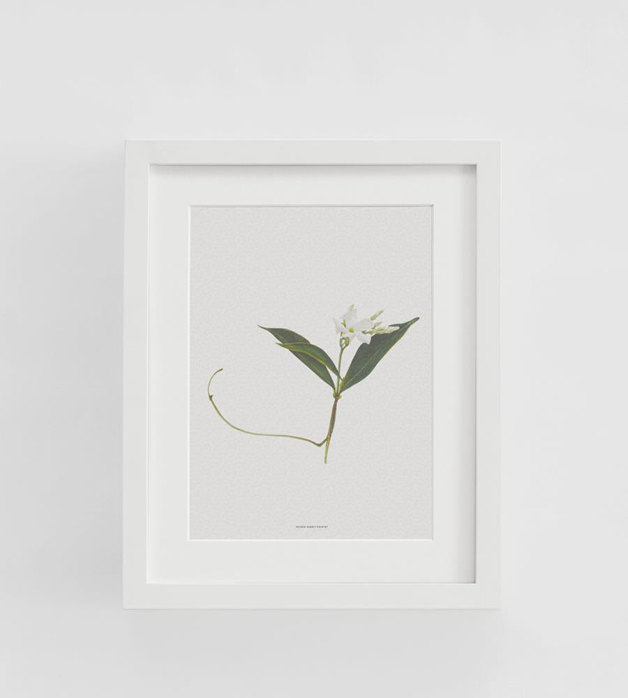 Father Rabbit | Framed Print | Jasmine