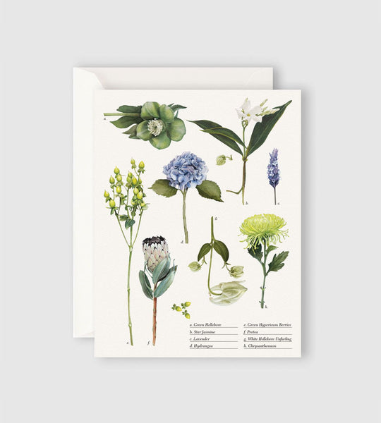 Father Rabbit Stationery | Botanical Collection Card