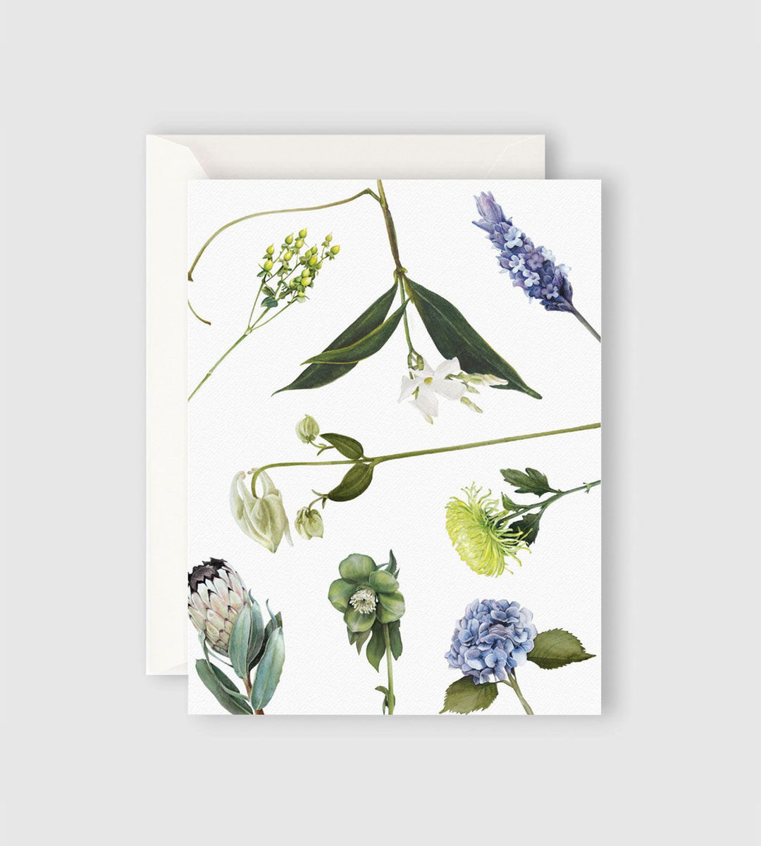 Father Rabbit Stationery | Botanicals Card
