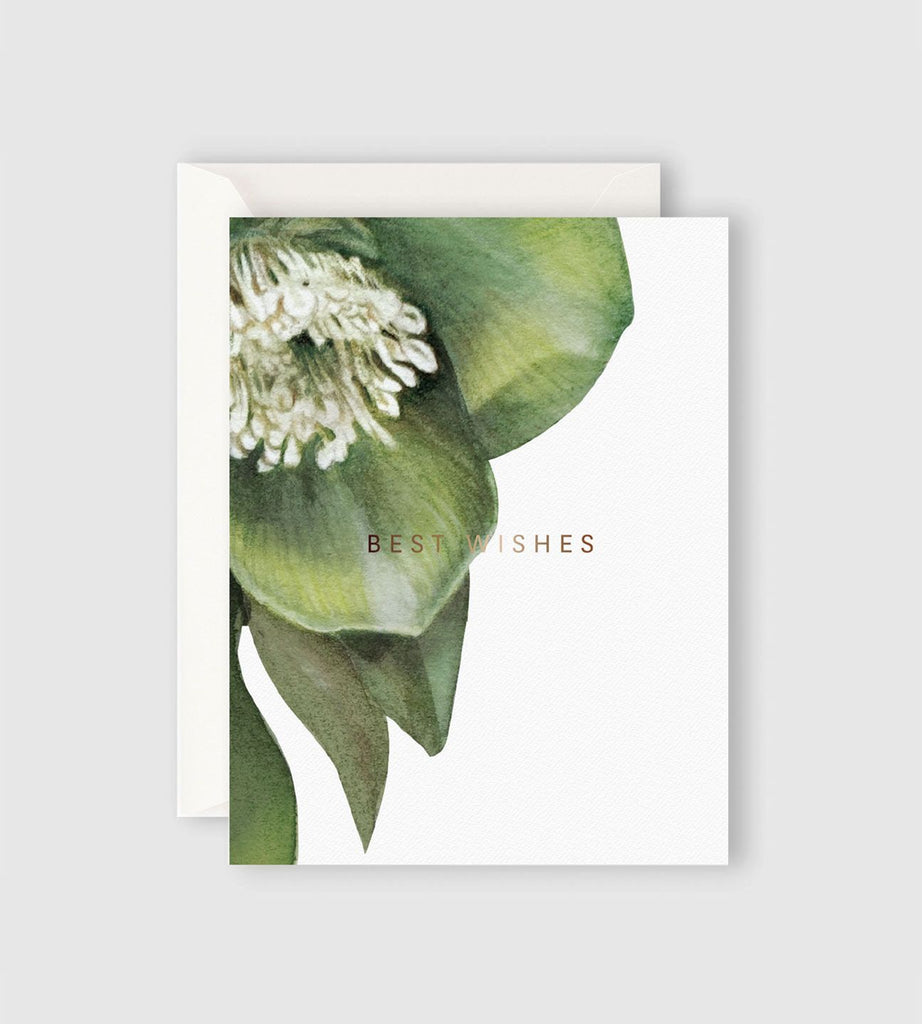 Father Rabbit Stationery | Hellebore Best Wishes Card
