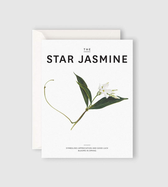Father Rabbit Stationery | The Star Jasmine Card