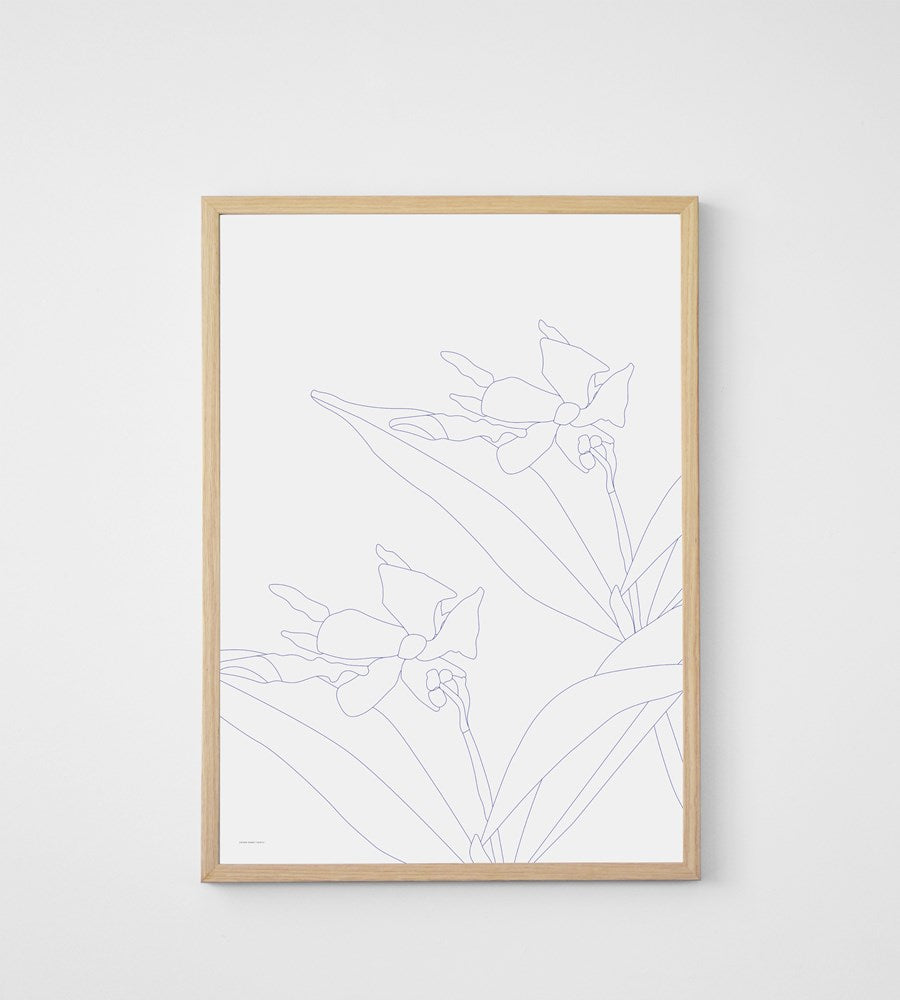 Father Rabbit | Blue Jasmine Print