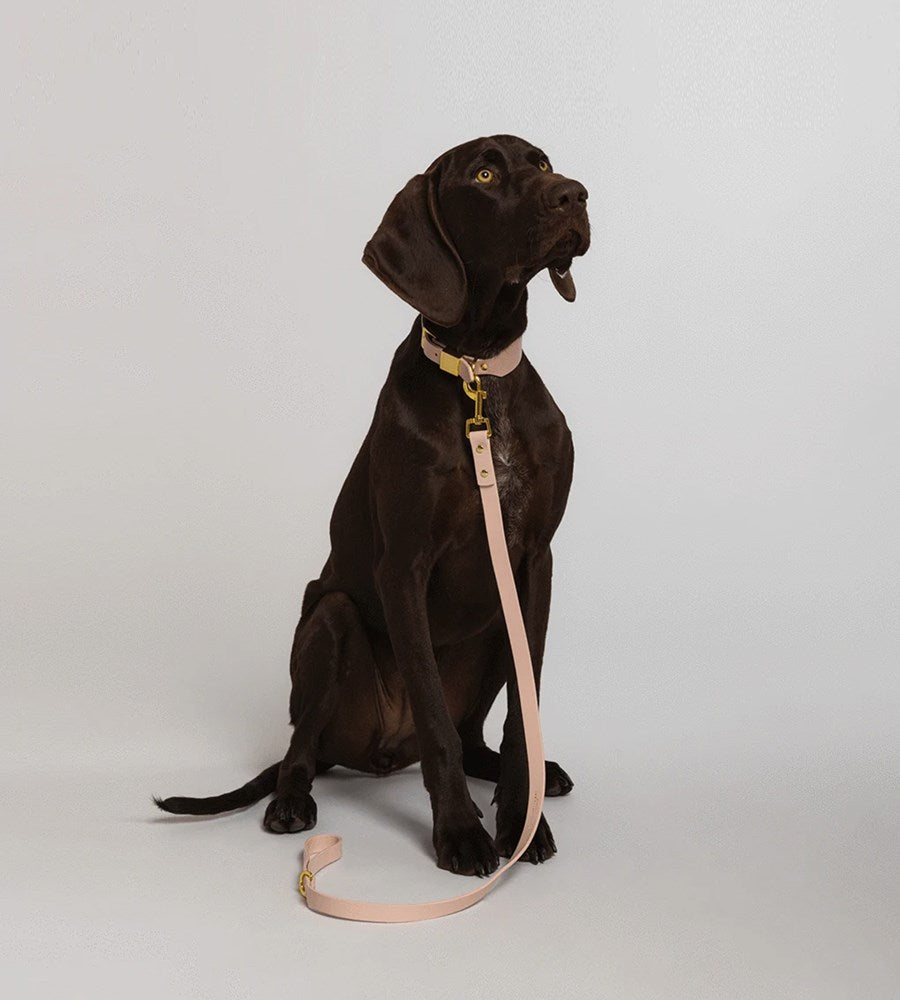 Ollie & James | Leather Dog Lead | Blush