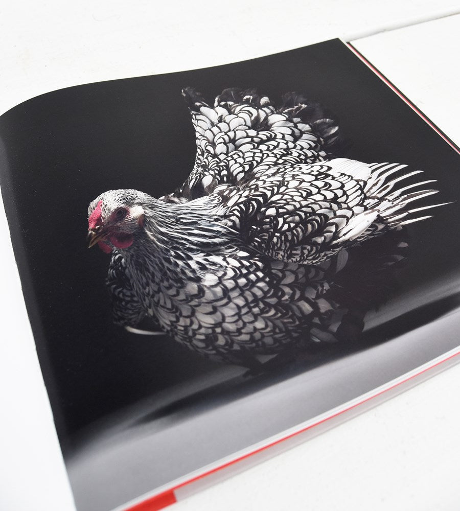 Chicken | A Declaration of Love | by Moreno Monti & Matteo Tranchellini